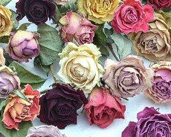 ドライフラワーのバラ