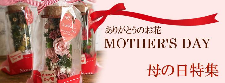 母の日の花特集