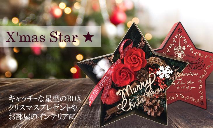 クリスマススター(レッド)