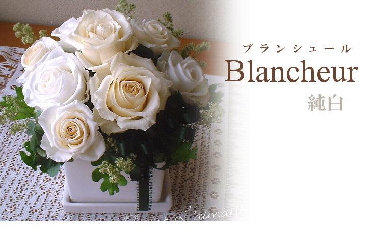 ブランシュール(ホワイト)【プリザーブドフラワー】