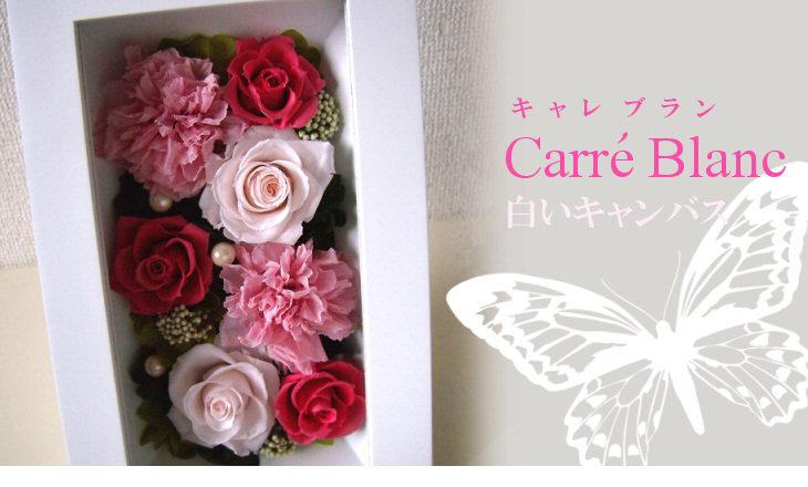 キャレブラン(ピンク)【プリザーブドフラワー】