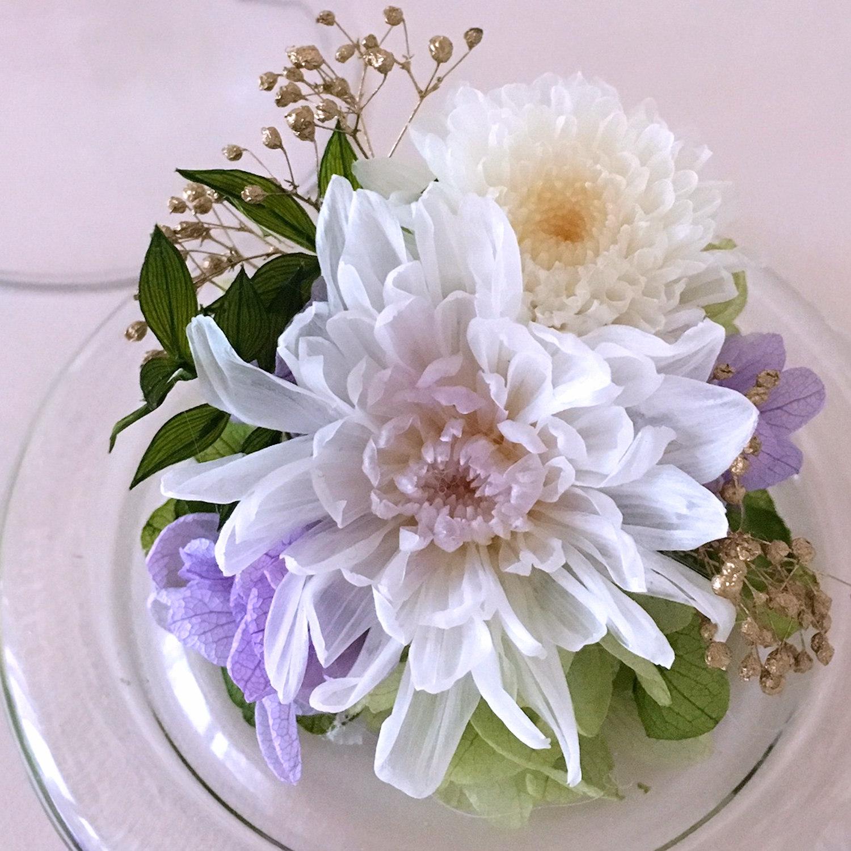 まめ菊(ホワイト)
