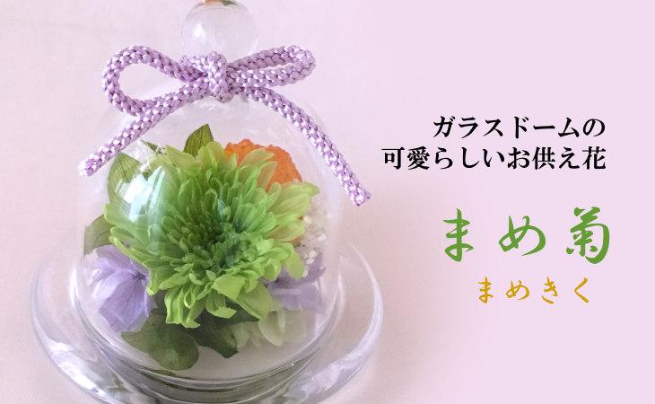 まめ菊(グリーン)