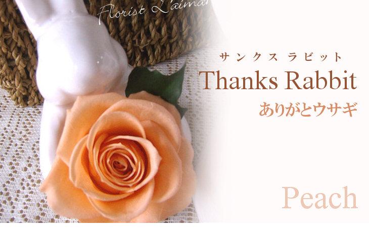 サンクスラビット(オレンジ)【プリザーブドフラワー】
