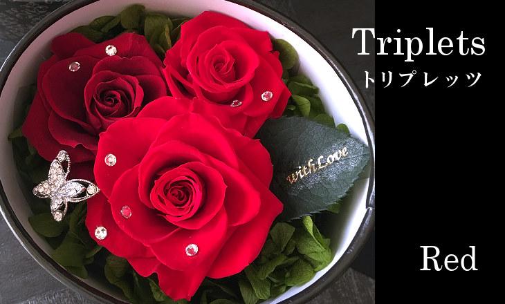 トリプレッツ(レッド)【プリザーブドフラワー】